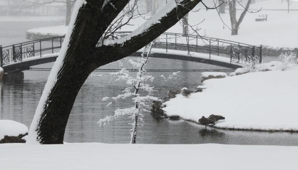 031 March Snow.jpg