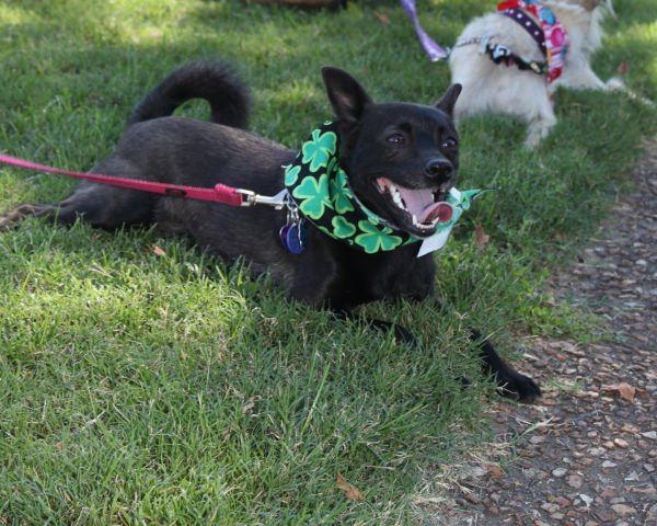 014 Strut Your Mutt 2013.jpg