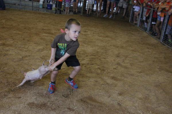 008 Pig Chase 2013.jpg