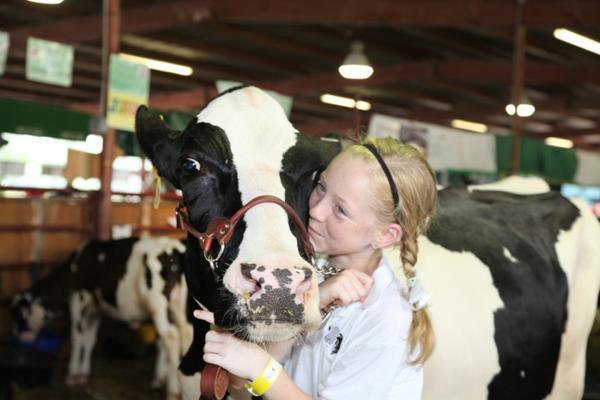 033 Fair Livestock.jpg