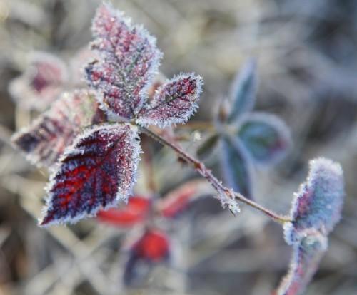 011 Frost.jpg