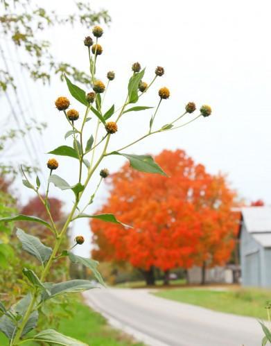 030 Fall trees.jpg