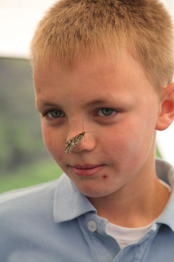 012 oll butterflies.jpg