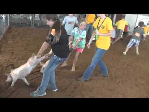 Pig Chase at Washington Town and Country fair 2014