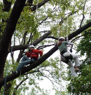 Canopy Climbs