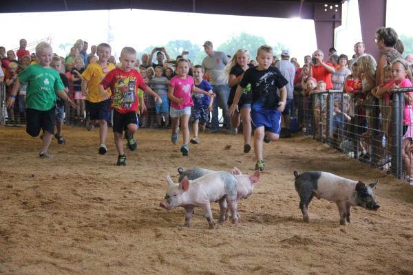 011 Pig Chase 2013.jpg