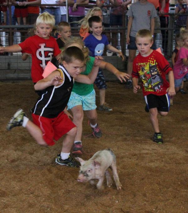 015 Pig Chase 2013.jpg