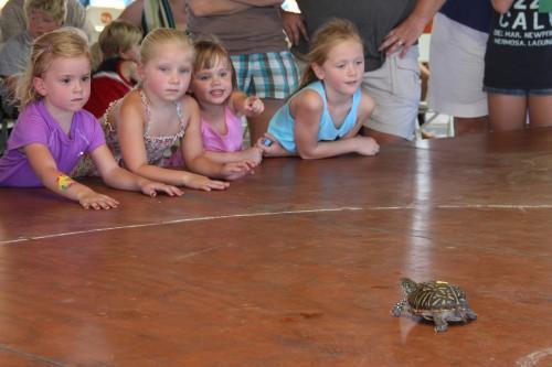 013 Turtle.jpg