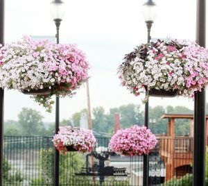 National Judges to Visit Washington July 17-18fFor America in Bloom Contest