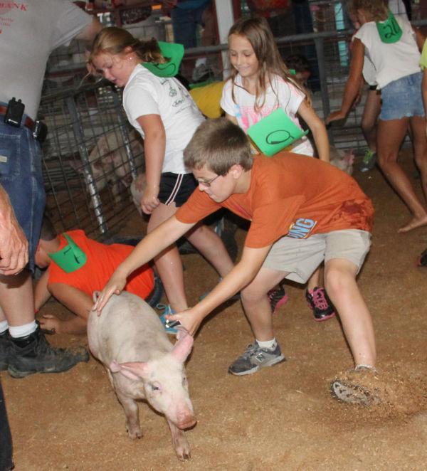 027 Pig Chase 2013.jpg