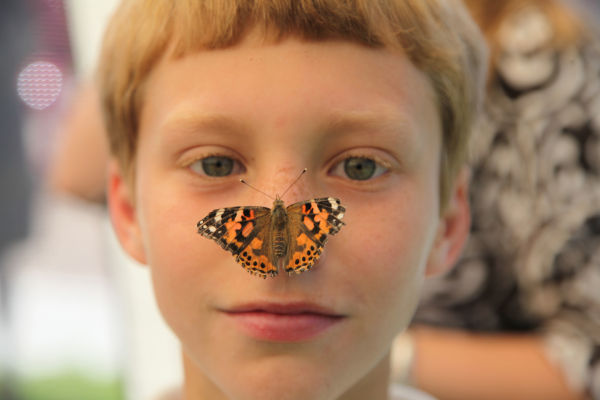 013 oll butterflies.jpg
