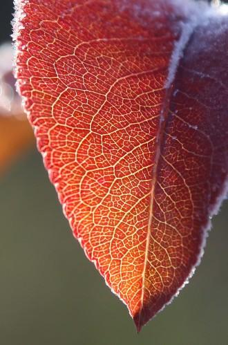 021 Frost.jpg