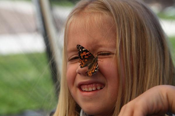 005 oll butterflies.jpg