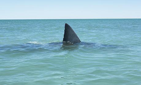 Man Wrestles Shark, Loses Job