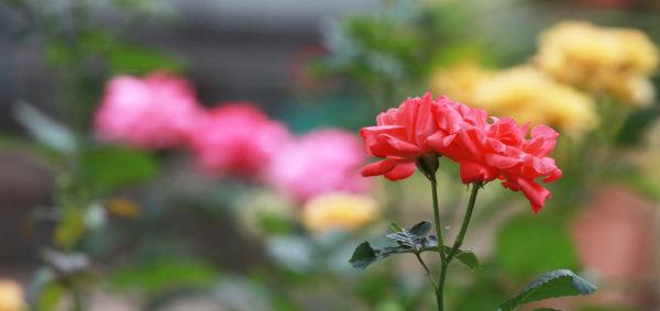 002 Early Summer Blooms 2014.jpg