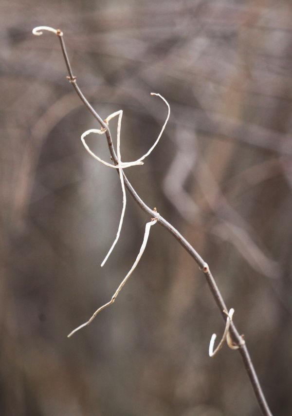 008 February Walk on Trail.jpg