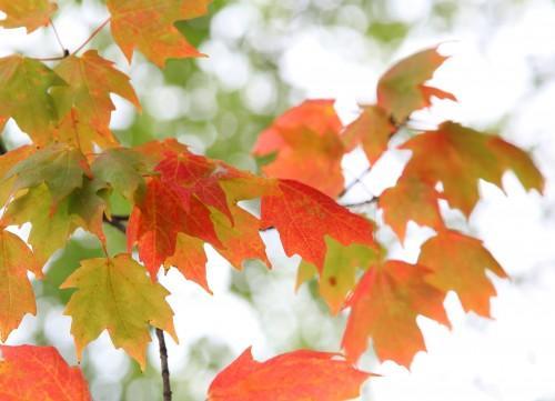 017 Fall trees.jpg