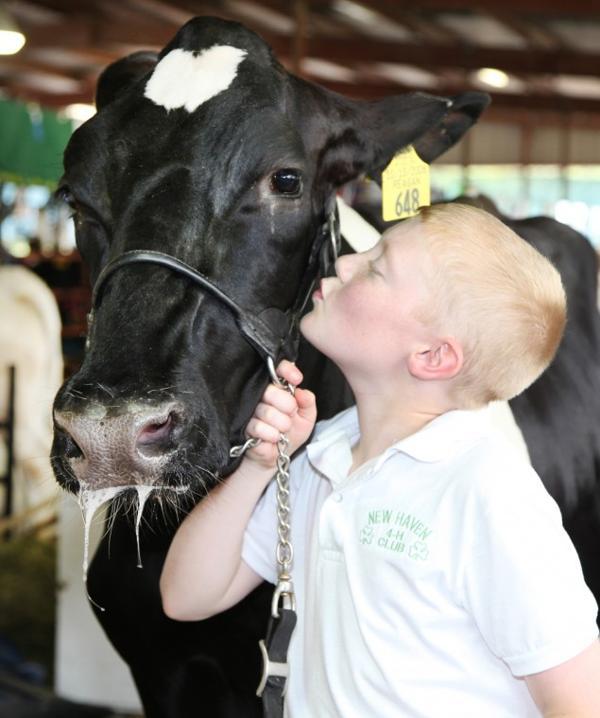 032 Fair Livestock.jpg
