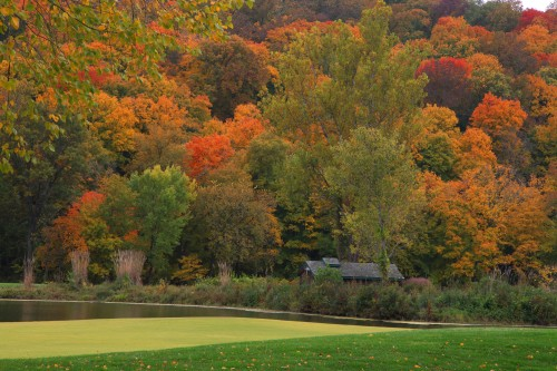 025 Fall trees.jpg