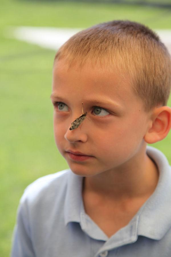 023 oll butterflies.jpg