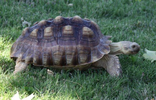 Tortoise 1
