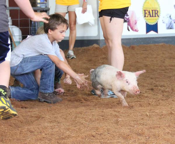 014 Fair Pig Chase 2014.jpg