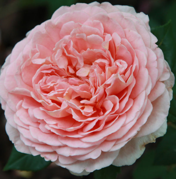 006 Early Summer Blooms 2014.jpg