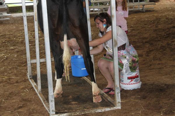 003 Milking Contest 2013.jpg