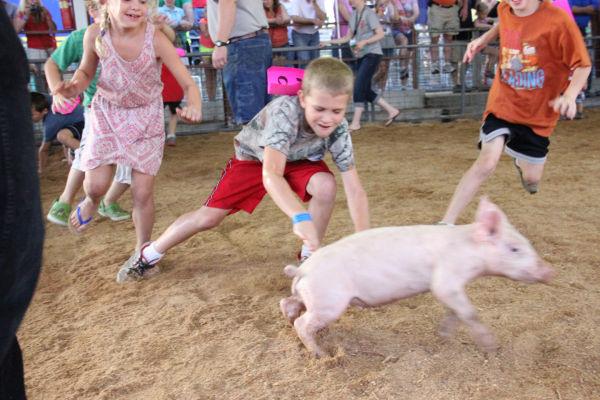 019 Pig Chase 2013.jpg
