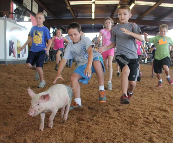 017 Fair Pig Chase 2014.jpg