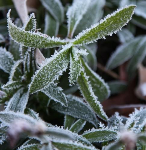 001 Frost.jpg