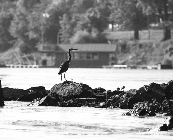 010 Scenes from the River Aug 2013.jpg
