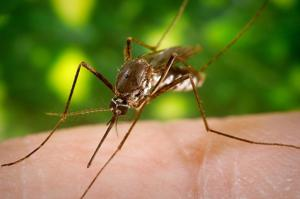 Washington Battling Heat, Mosquitoes