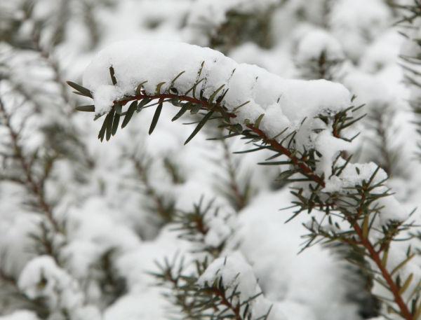022 Snow Jan 2 2014.jpg