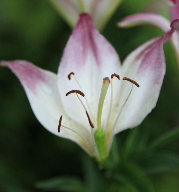 025 Early Summer Blooms 2014.jpg