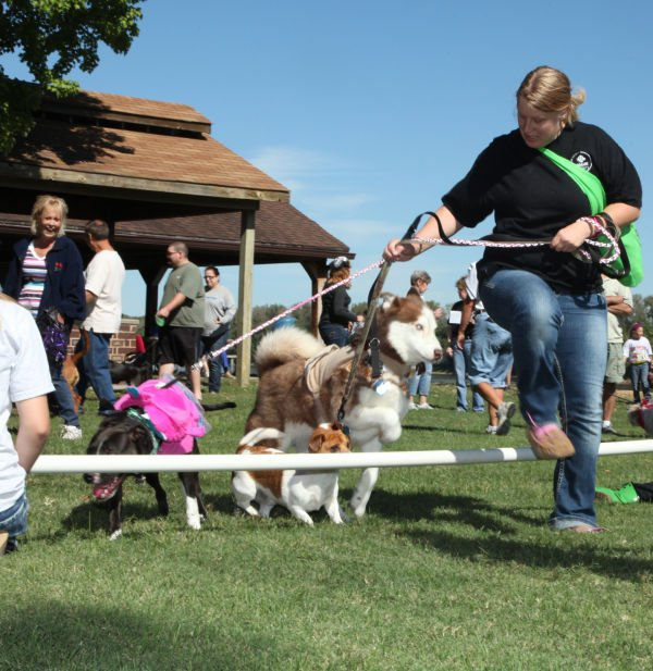 012 Strut Your Mutt 2013.jpg