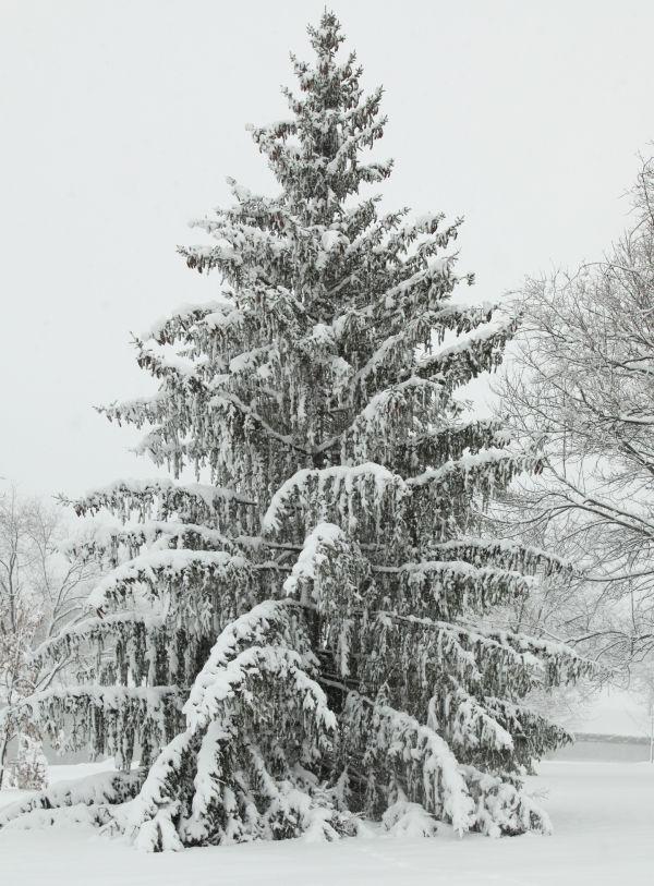 028 March Snow.jpg