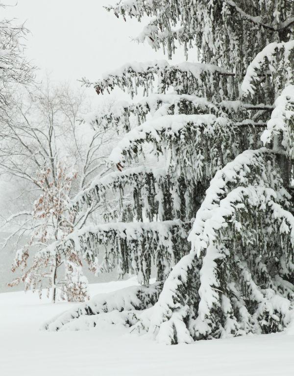 027 March Snow.jpg