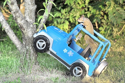 Squirrely Driver
