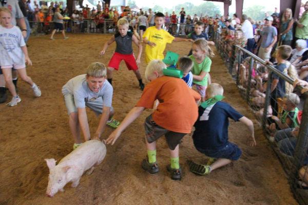 026 Pig Chase 2013.jpg