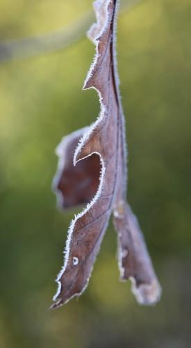 016 Frost.jpg