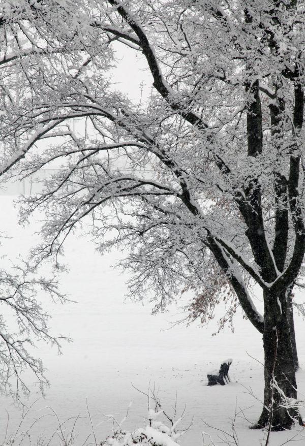 011 March Snow.jpg