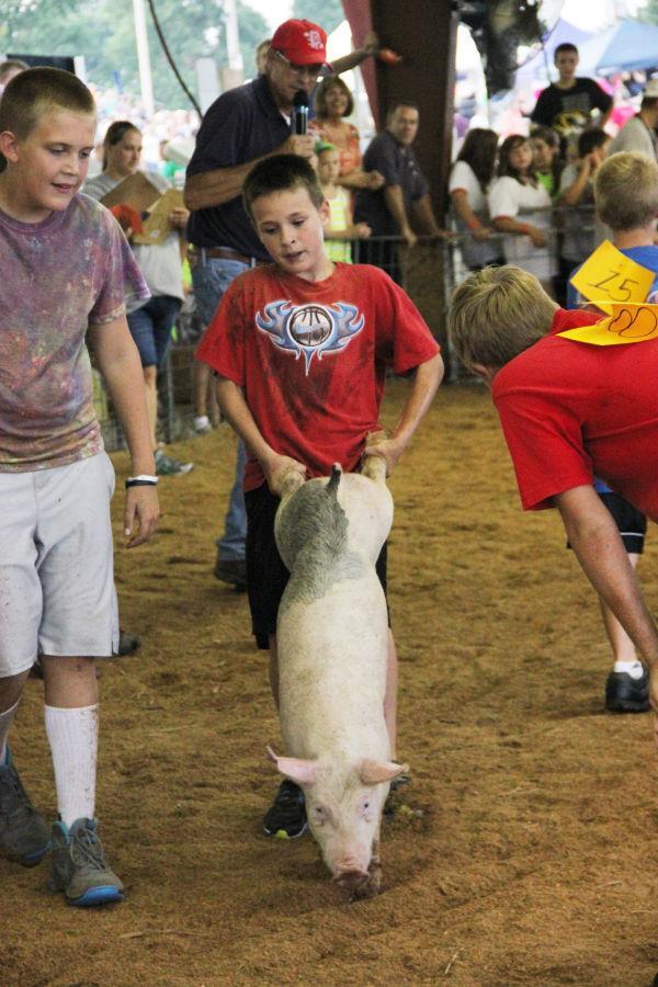033 Pig Chase 2013.jpg