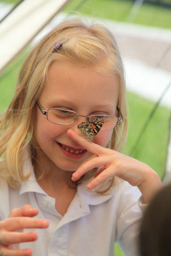 022 oll butterflies.jpg