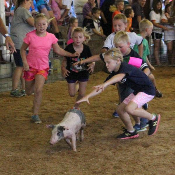 021 Pig Chase 2013.jpg