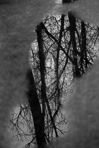 025 winter trail.jpg