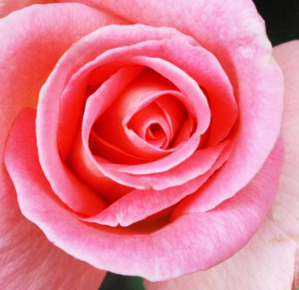 009 Early Summer Blooms 2014.jpg