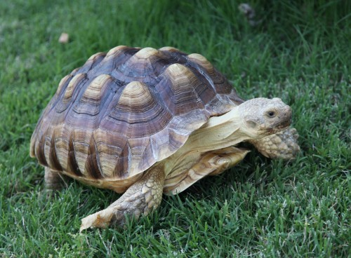 Tortoise 3