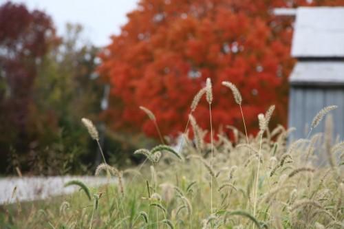 029 Fall trees.jpg