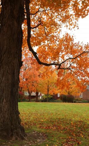 001 Fall trees.jpg